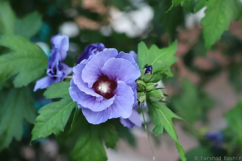 Blue purple flower