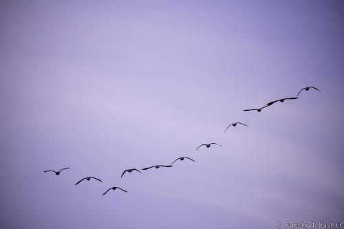 Birds flying high
